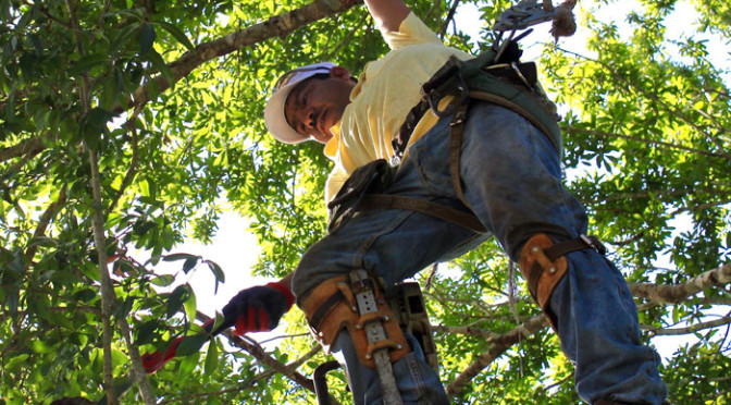 tree_trimmers_usa_tree_trimming_2