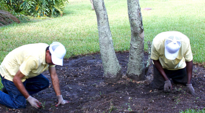 tree_trimmers_usa_weeding_2